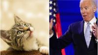 Джо Байдън и съпругата му взимат и котка в Белия дом