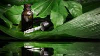 Масло от чаено дърво – ключът в борбата срещу акне